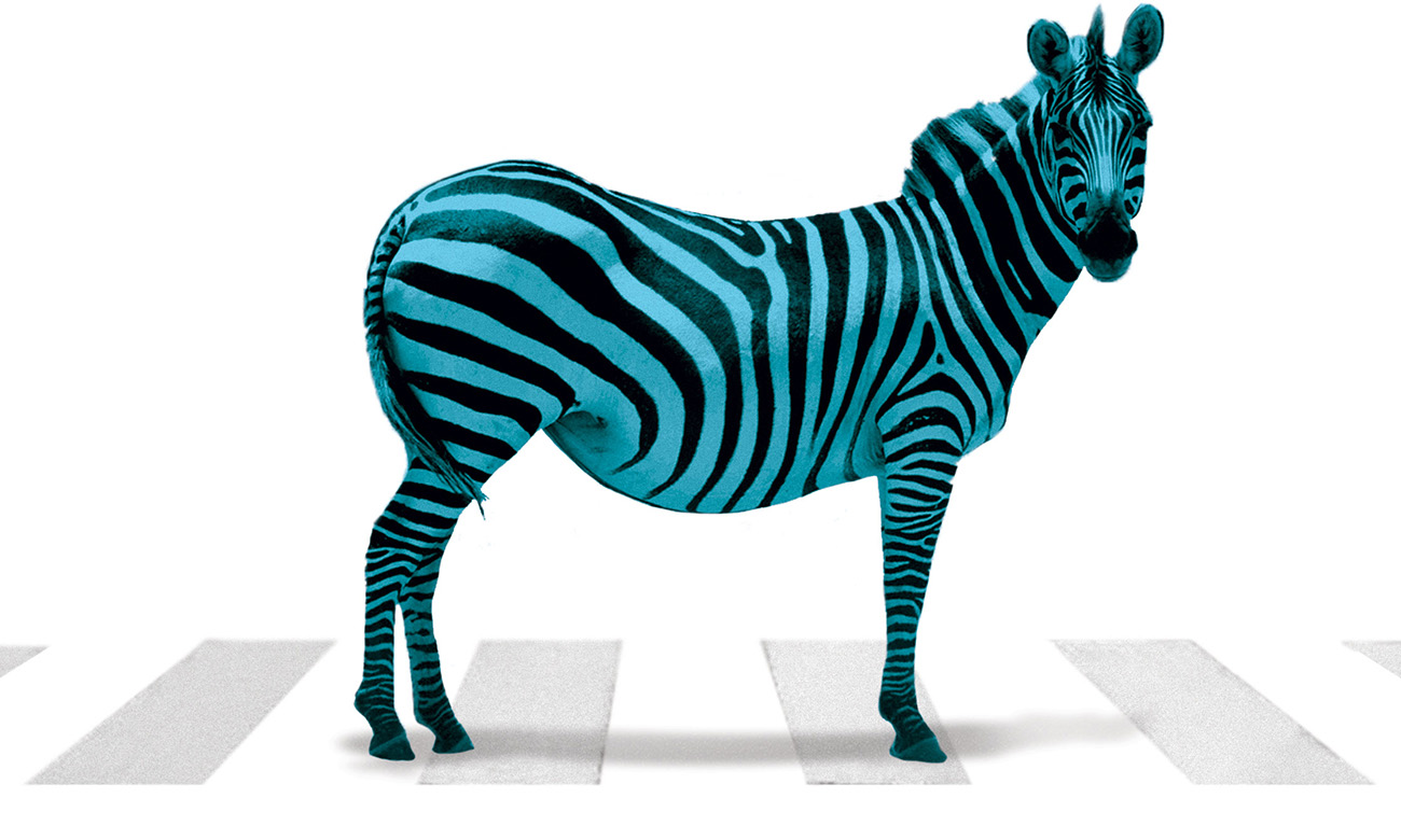 serraglia_zebra_crossing